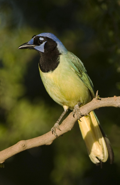 What Bird Taxonomy Teaches Us